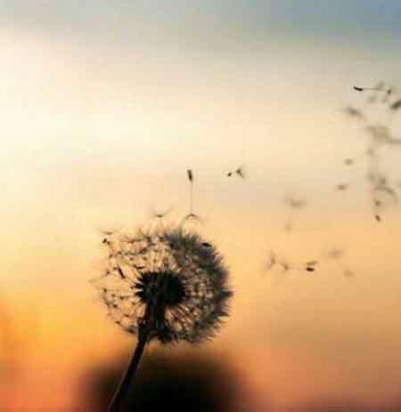 دانلود آهنگ جدید علی پناه بیا بهار به قلبم دیگه صبرم سر اومد